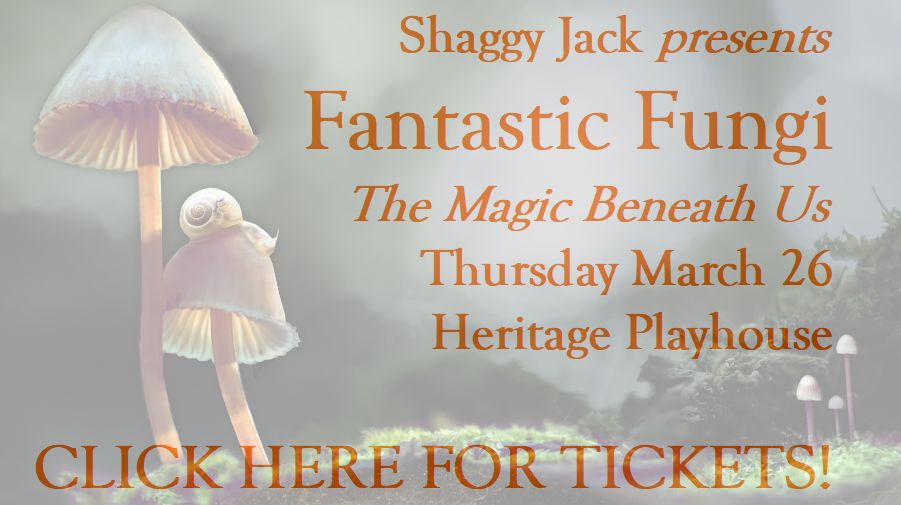 fantastic-fungi-click-here-for-tickets